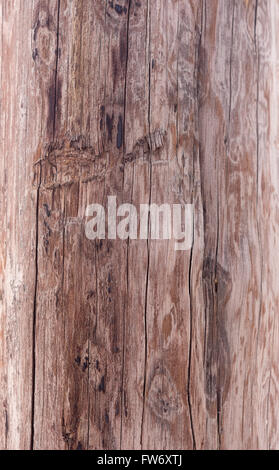 grunge wooden texture great as background - Stock Photo