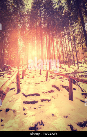 Vintage stylized sunset in mysterious forest with sun rays and long shadows on snow. - Stock Photo