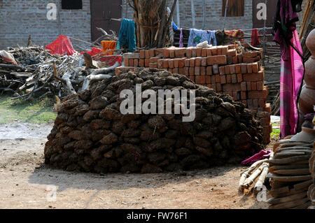 Cow dung drying in the sun village near Khajuraho, Madhya Pradesh in Northern India. - Stock Photo
