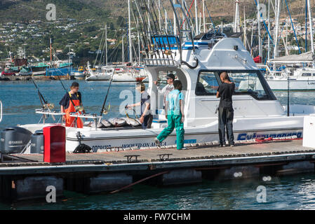 Freshly caught tuna being rinsed off on a boat in Hout Bay harbor - Stock Photo