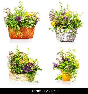 Garden herbs and flowers in container collection isolated on white background - Stock Photo