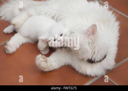 Cat, animal, domestic, tender, sweet, relaxing - Stock Photo