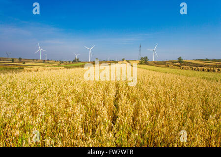 Gold field and wind turbines in Hebei province, China - Stock Photo