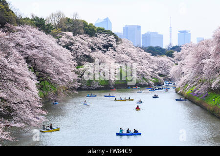 Tokyo, Japan. 1st April, 2016. People enjoy cherry blossoms in full bloom from rowing boats at Chidorigafuchi on - Stock Photo