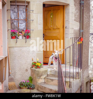Poodle at entrance of a rustic house in Switzerland - Stock Photo