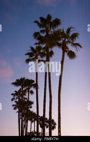 Palm trees silhoutted against a sunset in southern California,USA. - Stock Photo