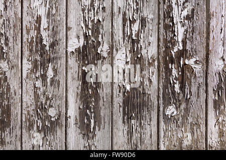 Light gray paint is peeling from an old board wall of brown vertical wooden boards. Taken in close-up. - Stock Photo