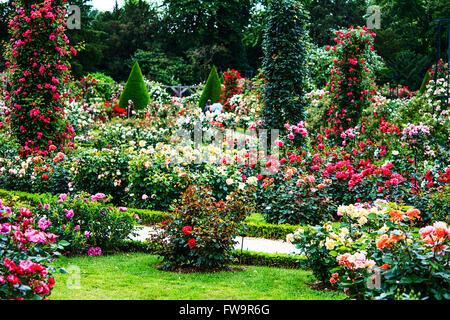 Paris- Bois de Boulogne classic rose garden in the Roseraie de Bagatelle - Stock Photo