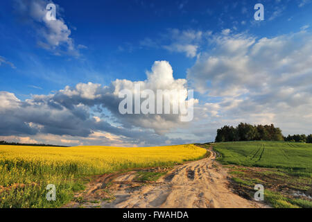 Country road in spring colza fields in Belarus - Stock Photo