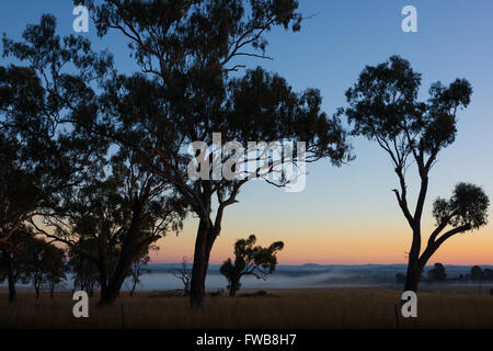 Gum trees and farmland on Darling Downs, Australia before sunrise - Stock Photo