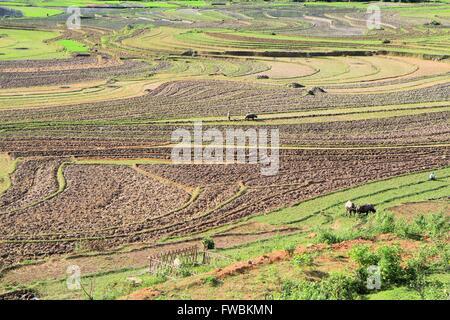 Farmer turning the soil in rice terrace fields, Hanoi, Vietnam, Asia - Stock Photo