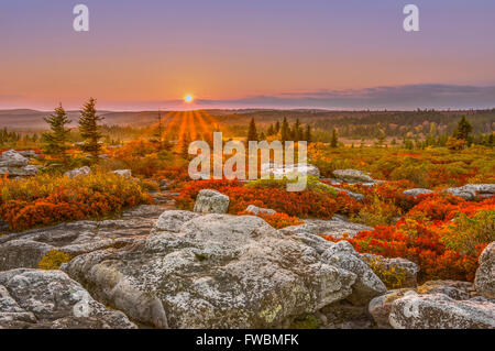 A pastel sky hangs over the setting sun highlighting the red autumnal leaves worn by the huckleberry bushes. - Stock Photo