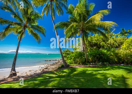 Rex Smeal Park in Port Douglas with tropical palm trees and beach, Australia - Stock Photo