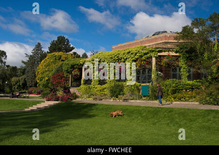 Valley Gardens, Harrogate, Yorkshire, England - lady with a dog, walks by the Art Deco Sun Pavilion in this beautiful, sunny, tranquil park.