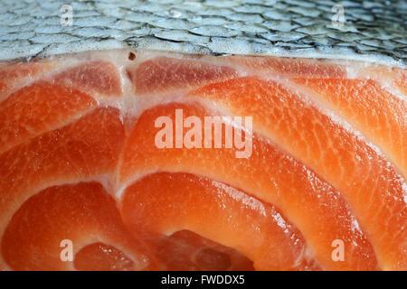 salmon closeup fresh fillets, horizontal photo - Stock Photo