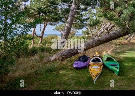 Sea kayaks, summer ready at shore behind pine trees, Scandinavia, Denmark, Havnsoe - one kayak for for a female, - Stock Photo