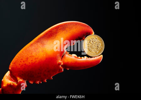 Pound coin in lobster claw - Stock Photo