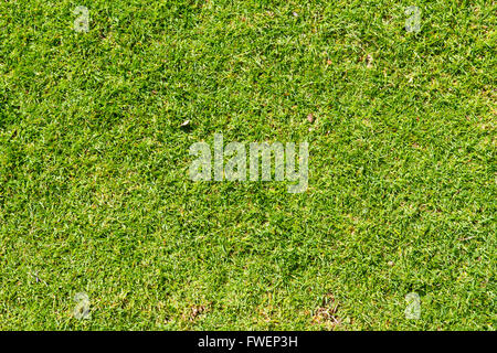 This abstract image shows some tropical green short grass and nothing else in a nature detail texture photo. - Stock Photo