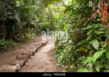 Way to get inside the Yagua village in the primary forest about 40 kilometers from Iquitos near the town of Indiana, - Stock Photo
