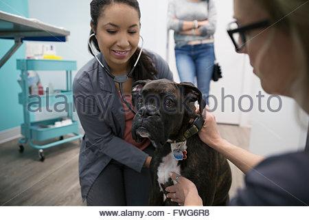 Veterinarians examining dog in clinic examination room - Stock Photo