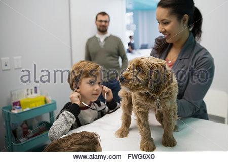 Veterinarian and boy with stethoscope examining dog - Stock Photo