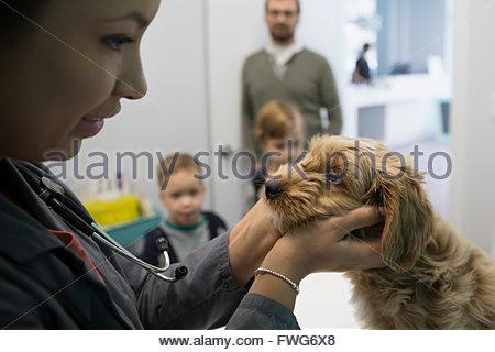 Veterinarian examining dog in clinic examination room - Stock Photo