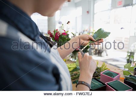 Florist trimming stems in flower shop - Stock Photo