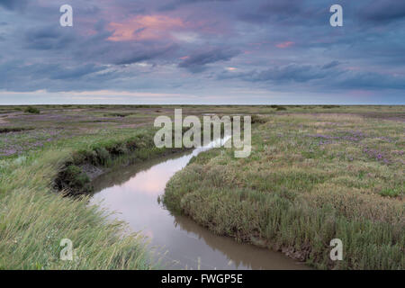 The Saltmarshes with sea lavender at Stiffkey, Norfolk, England, United Kingdom, Europe - Stock Photo