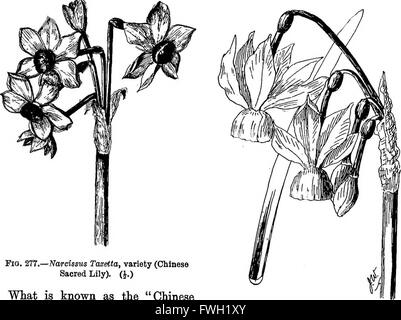 The bulb book; or, Bulbous and tuberous plants for the open air, stove, and greenhouse, containing particulars as - Stock Photo