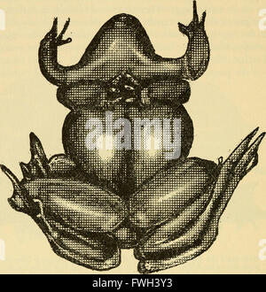 The ecology and life history of the common frog (Rana temporaria temporaria) (1962) - Stock Photo