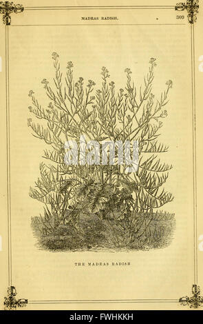 The Horticulturist and journal of rural art and rural taste (1860) - Stock Photo