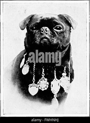 The new book of the dog; a comprehensive natural history of British dogs and their foreign relatives, with chapters - Stock Photo