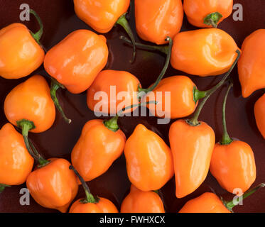 Close view of orange habanero peppers on a deep red dish. - Stock Photo