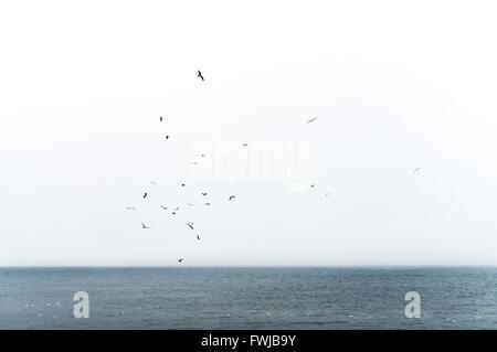 Birds Flying Over Sea Against Sky - Stock Photo