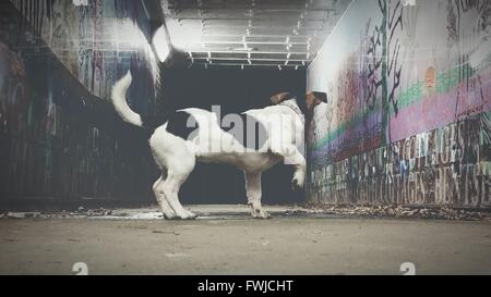 Side View Of Dog Standing In Tunnel - Stock Photo
