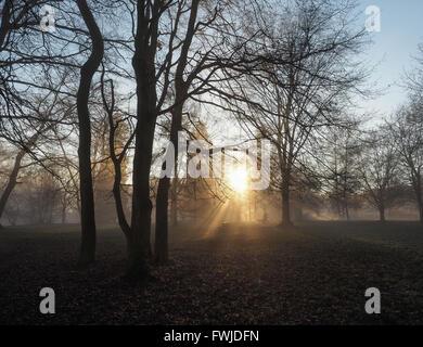 Sunlight Streaming Through Trees On Field - Stock Photo