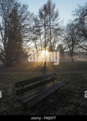 Empty Wooden Bench On Field Against Trees - Stock Photo