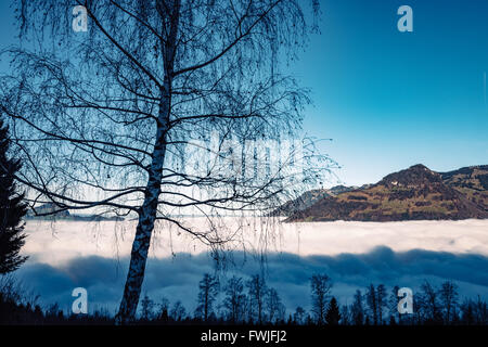 Tree Growing On Field By Cloudscape Against Sky - Stock Photo