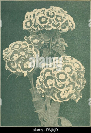 Beckert's seed store - vegetable seeds flower bulbs (1930) - Stock Photo