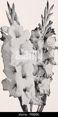 Beckert's seed store - vegetable seeds flower bulbs (1933) - Stock Photo