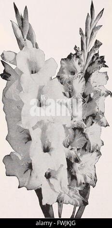 Beckert's seed store - vegetable seeds flower bulbs (1933) - Stock Photo