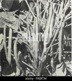 Bolgiano's capitol city seeds - 1963 (1963) - Stock Photo