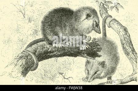 Brehms Tierleben. Allgemeine kunde des Tierreichs (1911) - Stock Photo