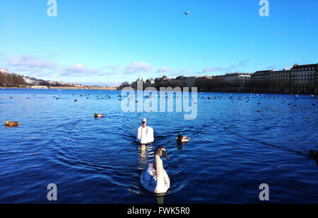 Swans Swimming In Sea Against Sky - Stock Photo