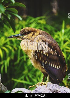 Full Length Of Bird Perching On Rock - Stock Photo