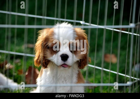 Close-Up Portrait Of Dog In Cage - Stock Photo