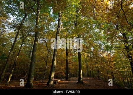 Grunewald forest Charlottenburg-Wilmersdorf Berlin Germany - Stock Photo