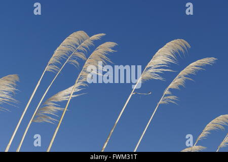 Low Angle View Of Grass Against Clear Blue Sky - Stock Photo