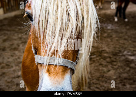Horse Watching. Head macro in bavaria in early spring - Stock Photo