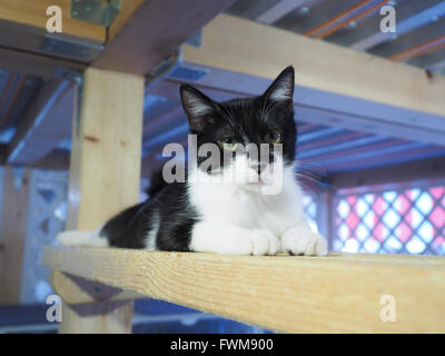 Cat Resting On Wooden Railing - Stock Photo